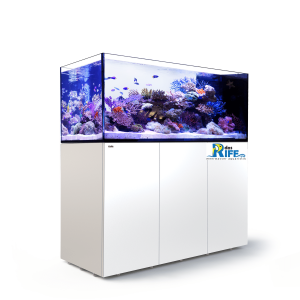 Red Sea REEFER™ Peninsula 650 - Weiss
